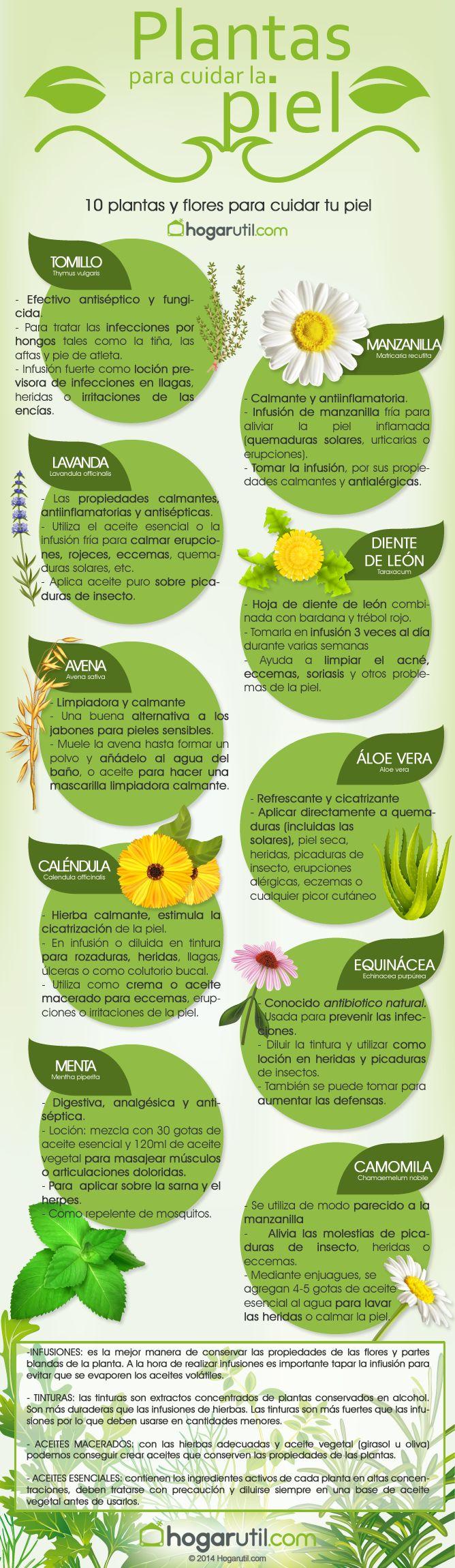 10 plantas para cuidar tu piel - Hogarutil plantas ...